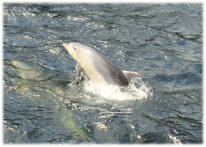 Les derniers dauphins !