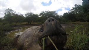 Bienvenue aux Galapagos !