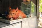 Baby Guling (cochon de lait)